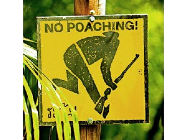 ANTI-POACHING